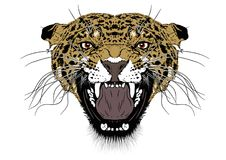 Vector illustration of the head of a leopard Stock Photo