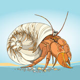 Vector illustration of Hermit Crab in the round gastropod shell on the blue background. Royalty Free Stock Photography