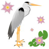 Vector Illustration of a Heron Stock Images