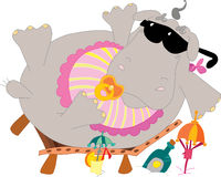 Hippo on the beach Stock Photo