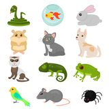 Vector illustration of home pets set isolated on white background, cat dog parrot goldfish, amphibian,hamster, insects royalty free illustration