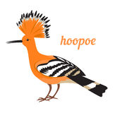 Vector illustration of Hoopoe. Colorful illustration of african bird - hoopoe. Vector icon.  on white background. Flat design Royalty Free Stock Photo