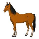 Vector illustration horse vector illustration