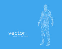Vector illustration of human body Stock Photography