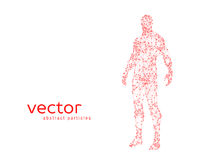 Vector illustration of human body Royalty Free Stock Images