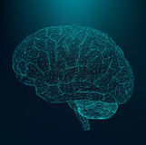 Vector illustration human brain. The structural Royalty Free Stock Photo