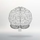 Vector illustration human brain. The structural grid of polygons. Abstract Creative concept  background. Molecular lattice. Royalty Free Stock Images