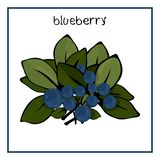Vector Illustration Icon of blueberry with leaves royalty free illustration