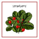 Vector Illustration Icon of Ripe strawberry with leaves royalty free illustration