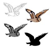Vector illustration, an image of a flying owl. Black line, black and white and gray spots, black silhouette, color image. vector illustration