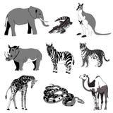 Vector illustration. Image rhino kangaroo, giraffe, elephant, zebra, snake, crocodile, camel, tiger. black and white. royalty free illustration