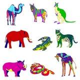 Vector illustration. Image rhino kangaroo, giraffe, elephant, zebra, snake, crocodile, camel, tiger various bright Royalty Free Stock Images