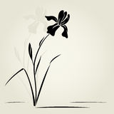 Vector iris flower. Vector illustration with iris for greeting card Royalty Free Stock Image