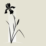 Vector iris flower. Vector illustration with iris for greeting card Stock Image