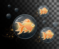 Vector illustration isolated on background Goldfish aquarium fish silhouette illustration. Colorful cartoon flat aquarium fish ico Stock Image