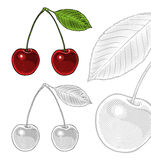 Sour cherry with leaf in vintage engraving style Royalty Free Stock Photo