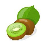 Vector illustration of isolated kiwi fruits. Royalty Free Stock Photography