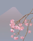 Vector illustration of japanese sakura Royalty Free Stock Photography