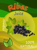 Vector illustration of a juice of a black currant packaging design. Realistic vector. Stock Images