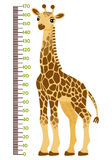 Vector illustration of kids height chart with cartoon giraffe. Stock Photography
