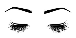 Vector illustration of lashes and brow. For beauty salon, lash extensions maker, brow master Stock Photos