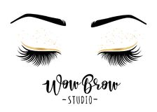 Vector illustration of lashes and brows. Brow studio. Vector illustration of lashes and brows. For beauty salon, lash extensions maker, brows master Royalty Free Stock Image