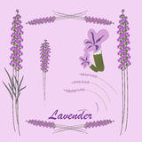 Vector illustration of lavender Royalty Free Stock Photos