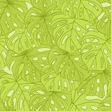 Vector illustration leaves of palm tree. Seamless Royalty Free Stock Photography
