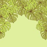 Vector illustration leaves of palm tree. Seamless Stock Photography