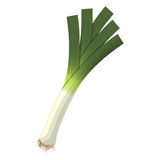 Vector illustration of  leek Stock Photography