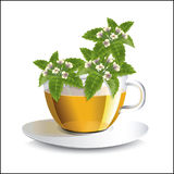 Vector illustration lemon balm  tea in a transparent cup. With flowers, a conceptual idea for the label Stock Image