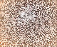 Vector illustration Leopard brown background Stock Image