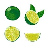Vector illustration of a lime fruit. Stock Photos