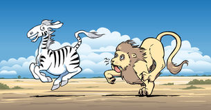 Lion hunting a zebra Stock Photos