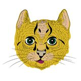 Vector illustration of little cat with long whiskers. White background. Hand drawn cute little cat with long whiskers royalty free illustration