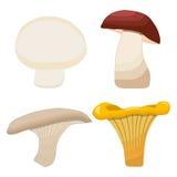 Vector illustration logo of edible mushroom. Fresh yellow chanterelle,honey agaric mushroom,porcini,boletus,champignon.Mushroom drawing consists of natural food Stock Image