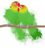 Vector illustration of lovebirds parrots. With watercolor splashes. Love. Pair of birds Stock Photography