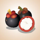 Vector illustration - Mangosteen. Vector illustration Mangosteen teen with Illustrator Royalty Free Stock Photo