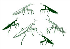 The vector illustration of mantis on white backgroung Stock Images