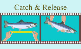 Vector illustration.Measurement of fish caught and release her. Royalty Free Stock Photography
