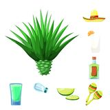 Vector illustration of Mexico and tequila symbol. Set of Mexico and fiesta vector icon for stock. Isolated object of Mexico and tequila sign. Collection of vector illustration