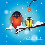 Vector Illustration mit dem Bild der hungrigen Vögel Stockbild