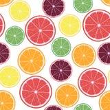 Vector Illustration mit Zitrusfruchtorangen, Zitronen, Pampelmusen, Kalken und Tangerineringen lizenzfreie abbildung