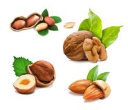 Vector illustration mix of different types nuts. On a white background vector illustration