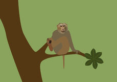 Vector illustration of monkey Stock Images