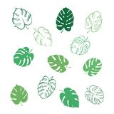 Vector illustration of monstera leaves. Vector botanical illustration of fern and monstera leaf. Isolated outline modern drawing of tropical plant. Set of exotic Royalty Free Stock Image