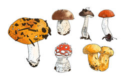 Vector illustration of mushrooms set: russula, boletus. Chanterelles, Leccinum aurantiacum red cup boletus, Leccinum brown stock illustration