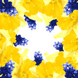 Vector illustration with narcissus and muscari Royalty Free Stock Image