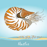 Vector illustration of Nautilus Pompilius or chambered nautilus on the blue background. Striped sea mollusk in contour style Stock Image