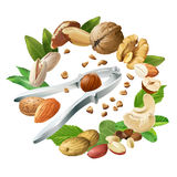 Vector illustration of nutcracker and nuts Stock Photo